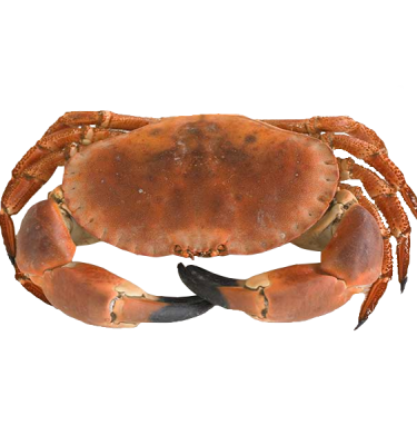 product-browncrab